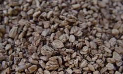 huesos de aceituna biomasa